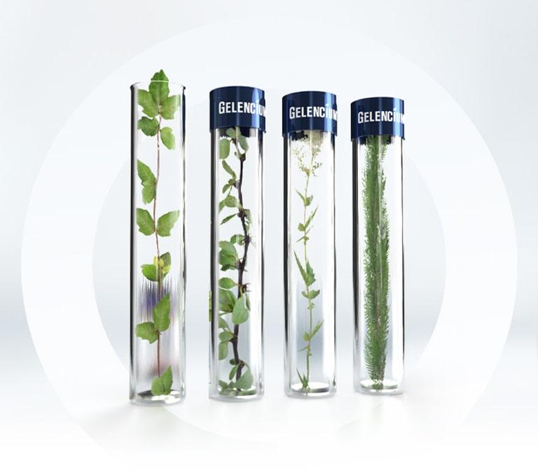Pflanzen in Reagenzgläsern